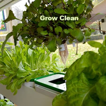 Grow Clean