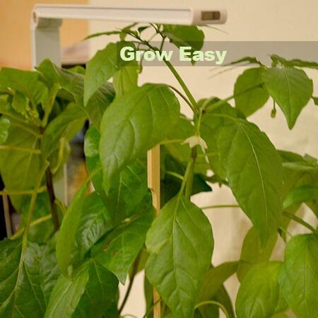 Grow Easy