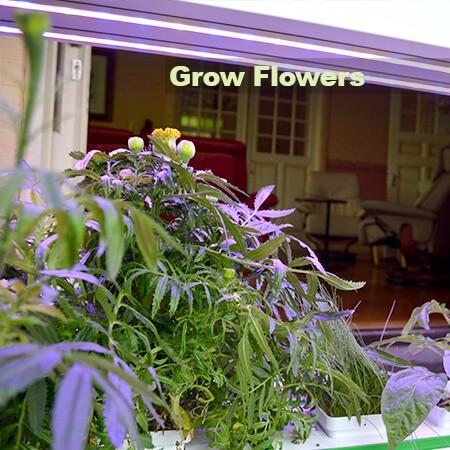 Grow Flowers