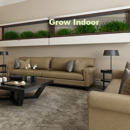 Grow Indoor