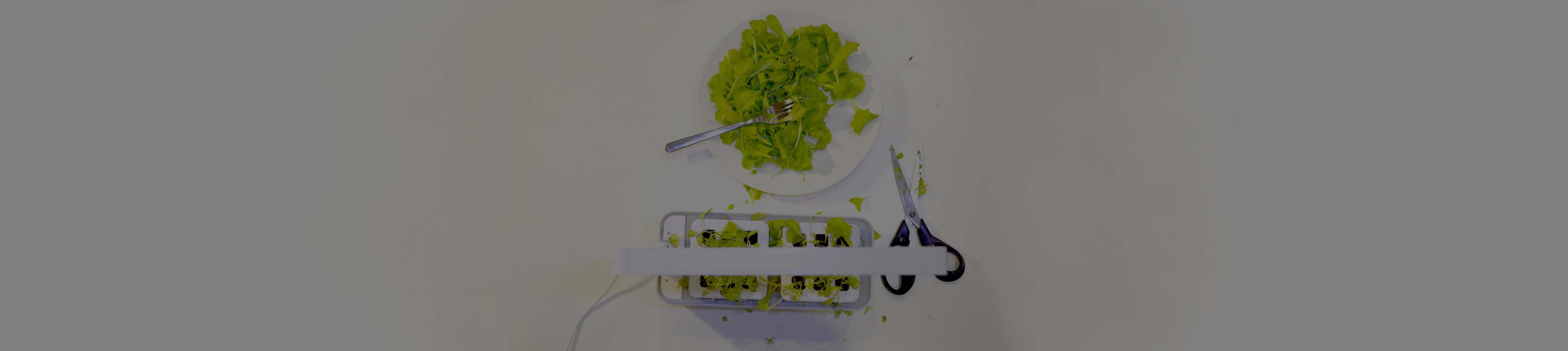 cover veggering