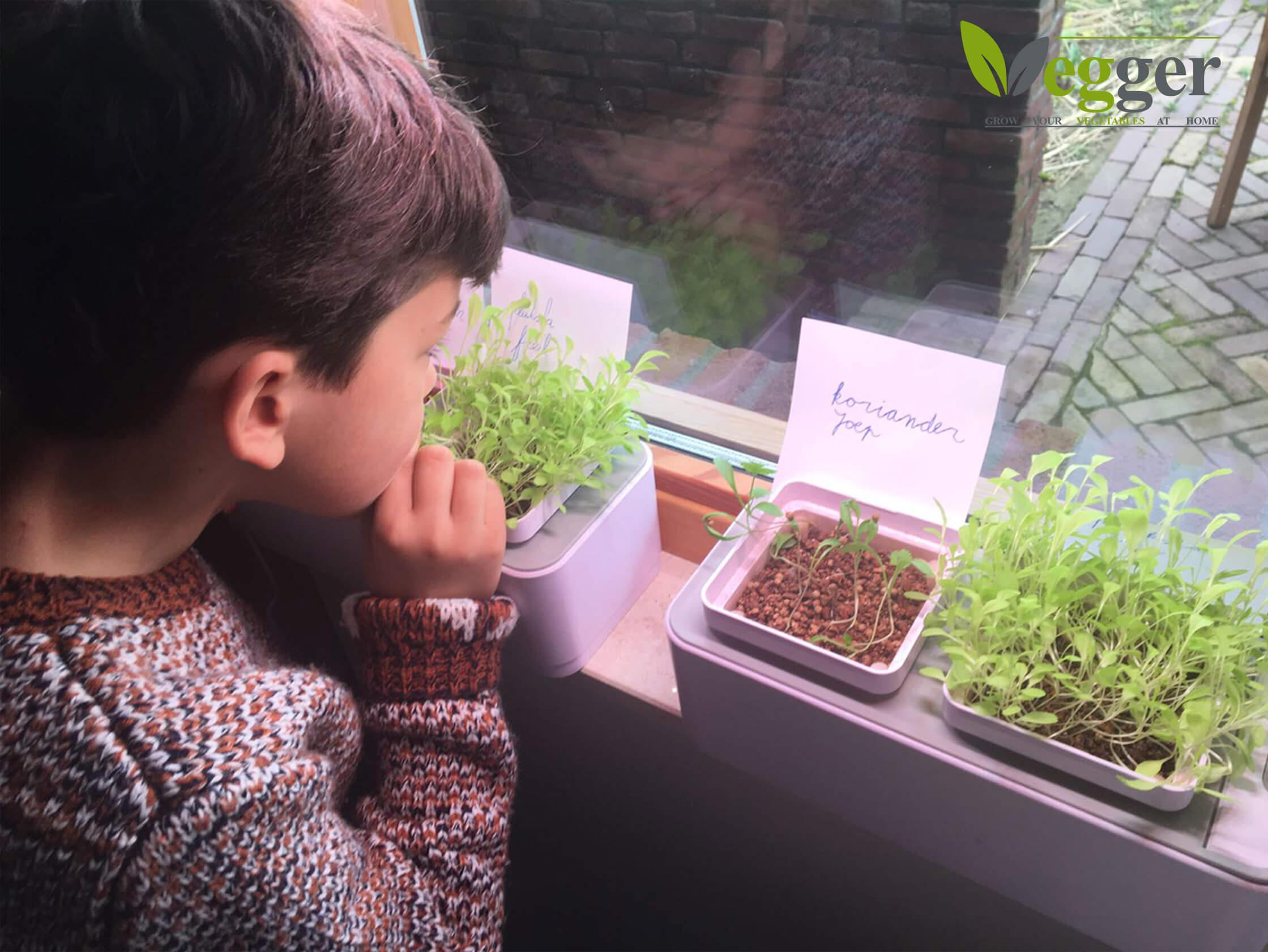 VEGGER Scholen – Voedsel En Voedingseducatie