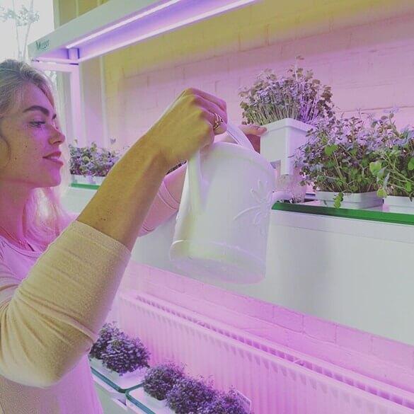 Binnen eigen groenten kweken