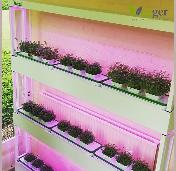Vegger Groenten Indoor Vertical Farm