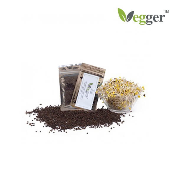 Broccoli –  Bio Microgroenten – 4 Zakjes