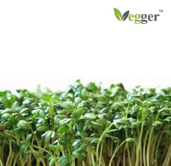 Red Clover Bio Microgroenten 4 Zakjes Vegger Smart Indoor