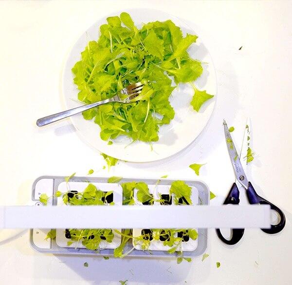 Lokale groenten- en kruidenproductie