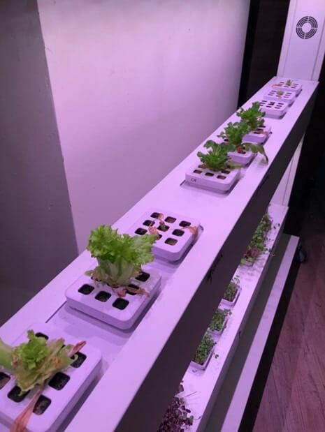 vegger vertical farm