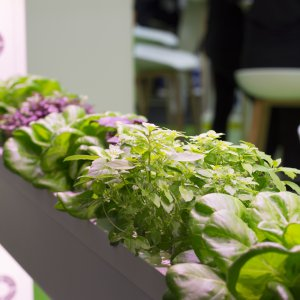 Effects Of High-tech Urban Agriculture On Healing Environments In Dutch Nursing Homes