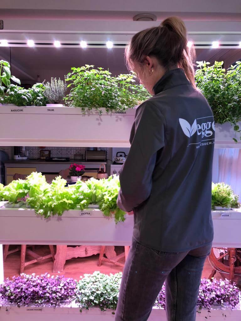 vegger hydroponic indoor garden